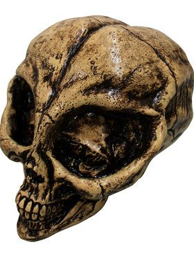 Alien Skull Resin Prop