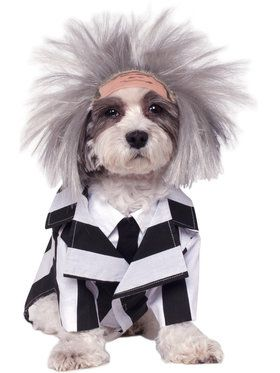 Beetlejuice Costume For Pets