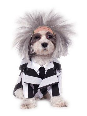 Beetlejuice Costume for Pet