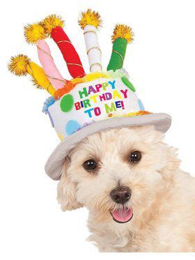 Birthday Cake Hat Dog Costume