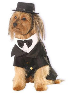 Dapper Dog Costume Pet Small