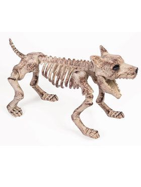 Dog Skeleton Prop