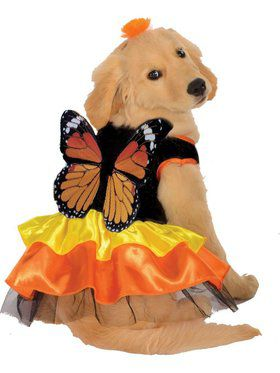Dog's Beautiful Butterfly Costume