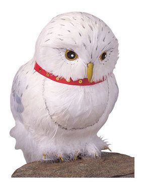 Feathered Owl Harry Potter