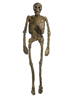 Full Body Rotten Skeleton Decoration