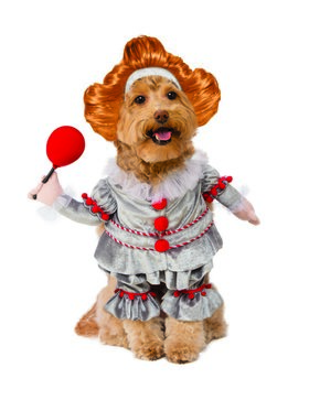 Walking It Pennywise Dog Costume