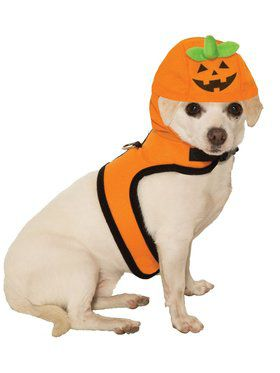 Jack-O-Lantern Costume for Pet