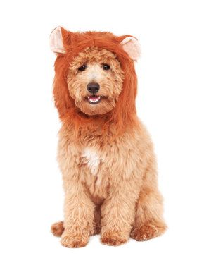 Lion's Mane Classic For Pets