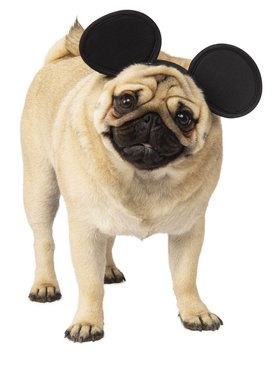 Mickey Mouse Costume For Pets
