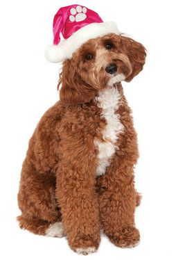 Pink Santa Hat Accessory for Pets