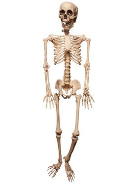Place and Hold Lifesize Skeleton Prop