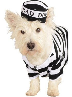 Prisoner Dog Costume For Pets