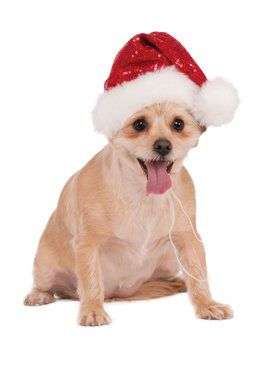 Red Sequin Santa Hat Accessory for Pets