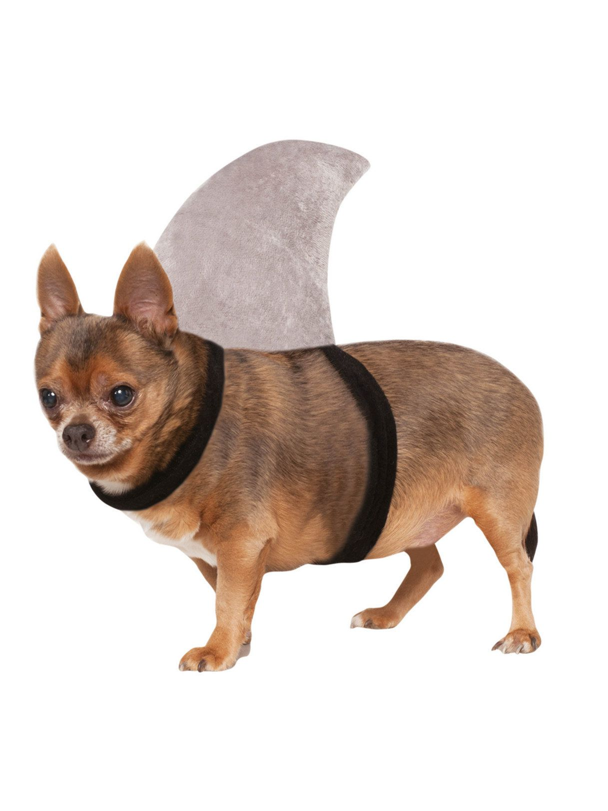 New Arrival  sc 1 st  Wholesale Halloween Costumes & Shark Fin Costume for Pet - Dog and Cat Costumes for 2018 ...