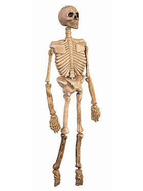 "36"" Posable Skeleton"